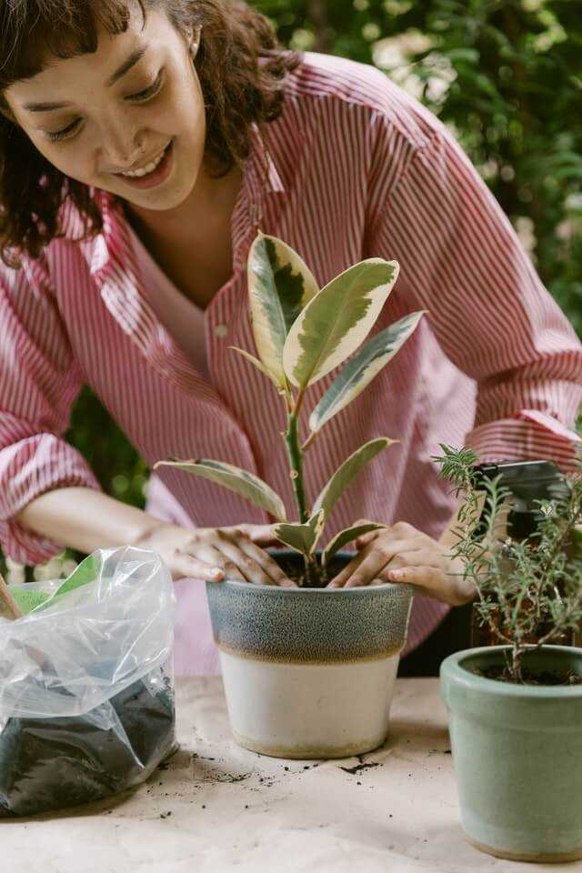 woman planting plant in pot